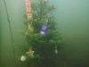 Weihnachtstauchen2017_15